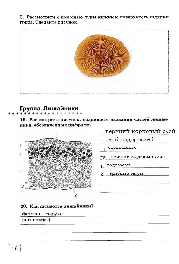 Решебник Для Рабочей Тетради По Биологии 7 Класс Захаров