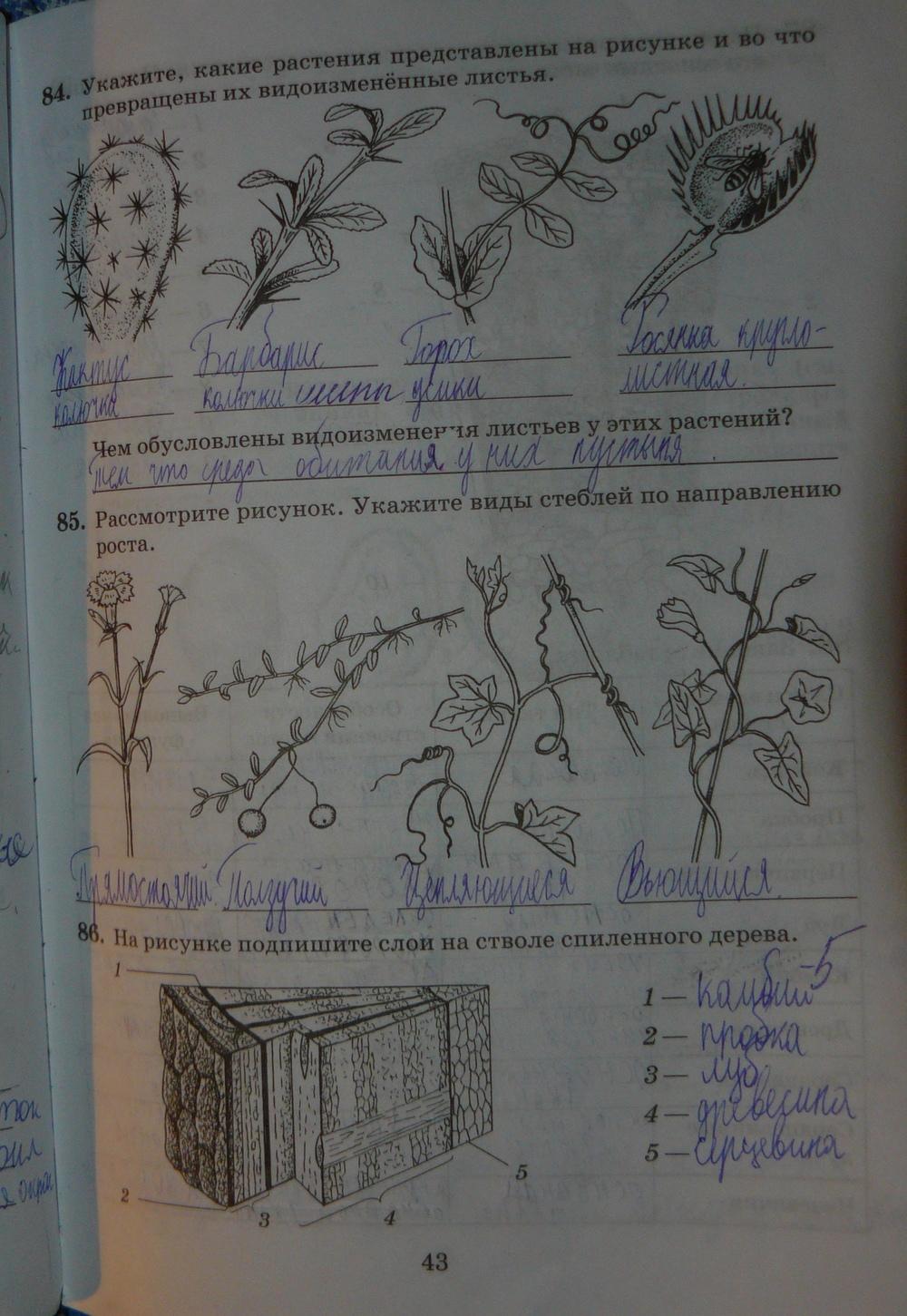Гдз биология 6 класс рабочая тетрадь пасечник многообразие