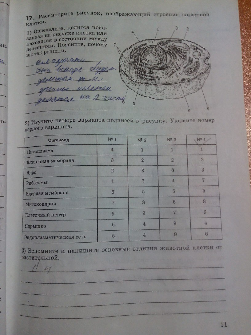 гдз по биологии 11 класс рабочая тетрадь беляев