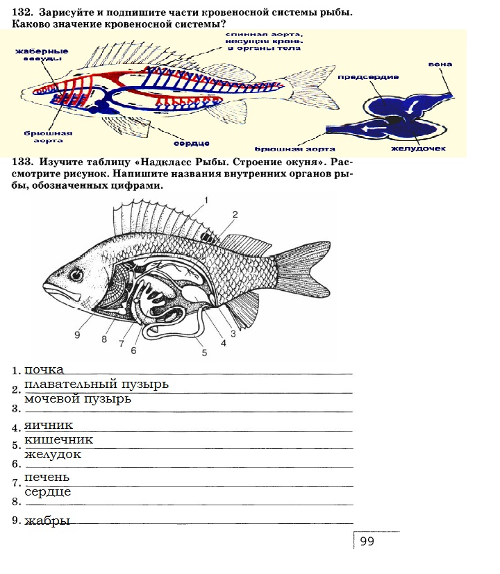 гдз по биологии в рабочей тетради 7 класс с рыбками