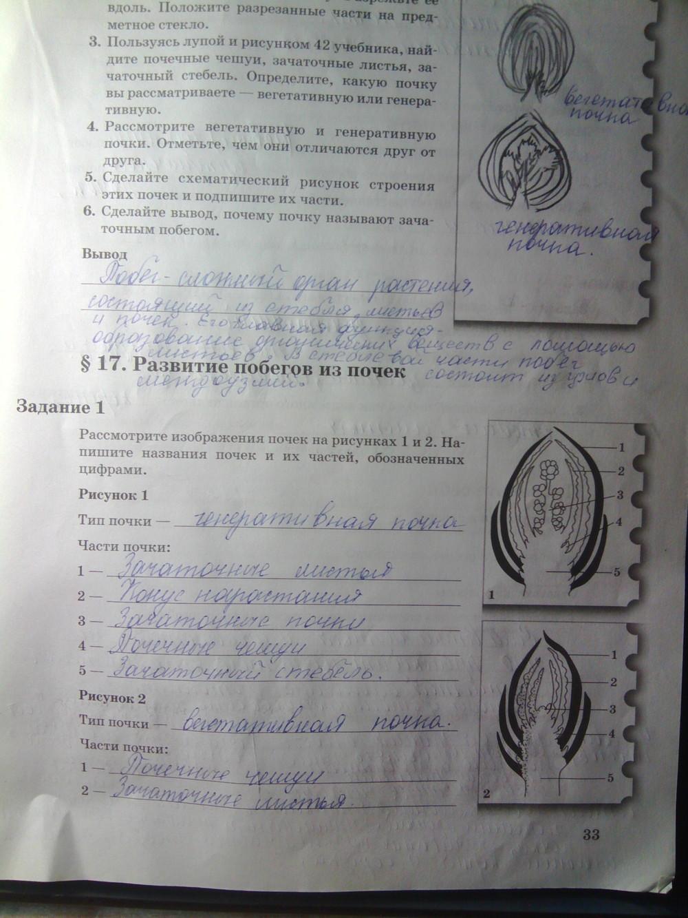 Гдз по биологии 6 класс рабочая тетрадь 2 часть