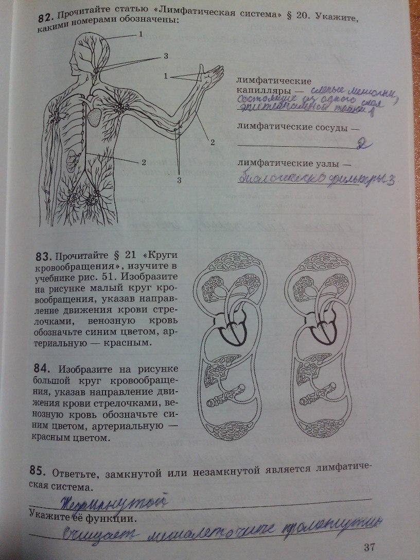 р гдз биология рабочая тетрадь