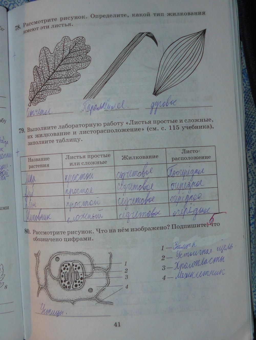 пасечник биологии рабочая по гдз 26 6 тетрадь класс