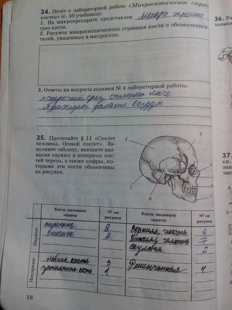 маша тетрадь по рабочая биологии беляев 8 гдз класс