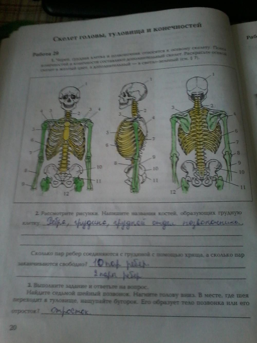 Гдз По Рабочей Тетради По Биологии 8 Класс Маш Драгомилов 1 Часть