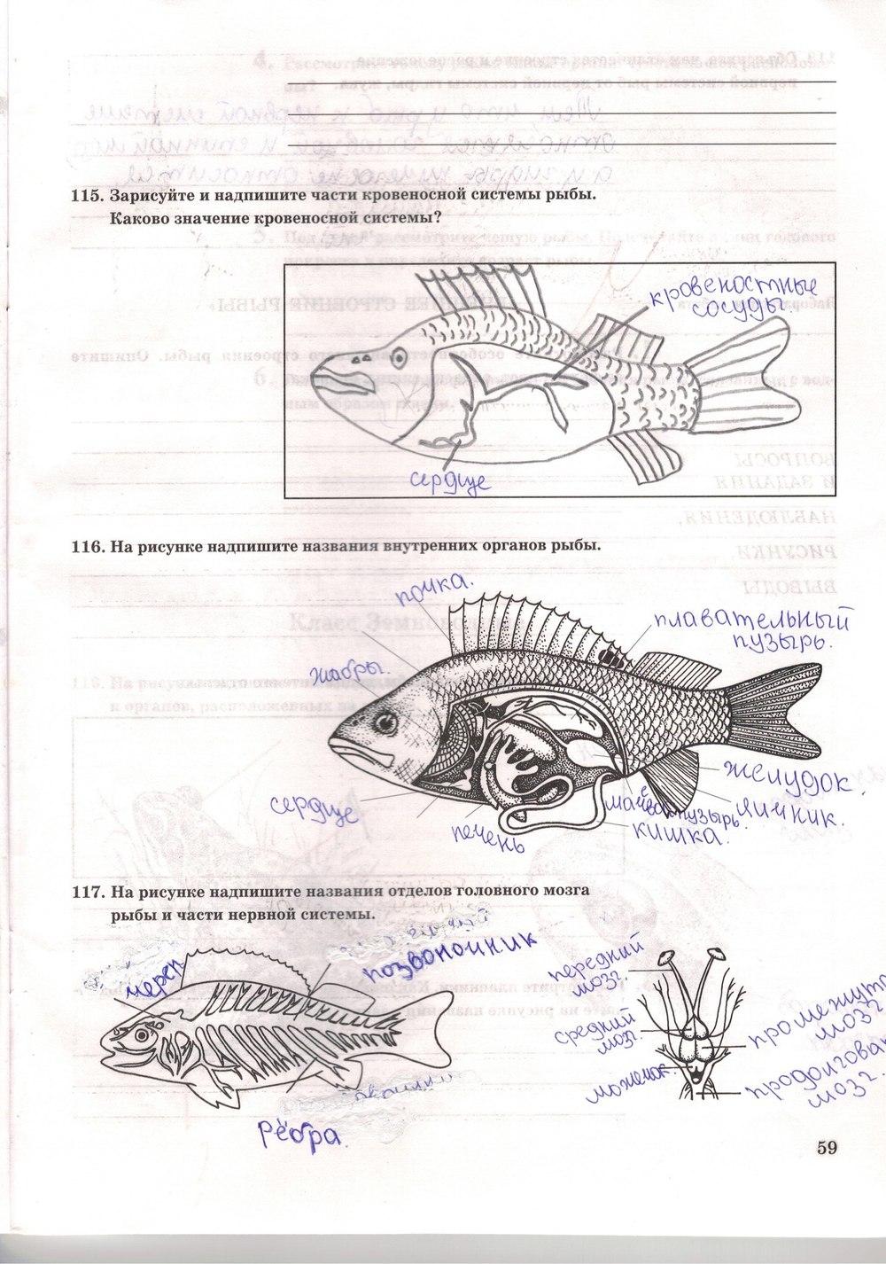 Гдз По Биологии 7 Класс Рабочая Тетрадь Сонина С Рыбками