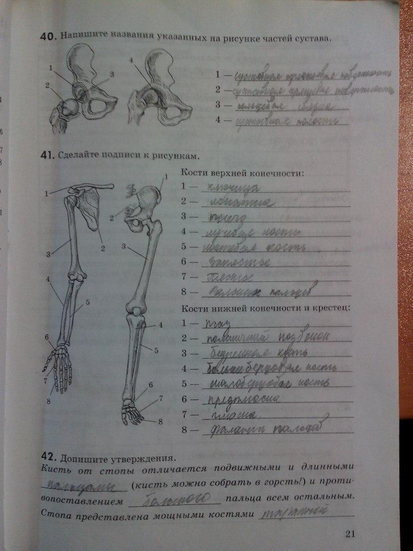 Решебник по биологии рабочая тетрадь колесова маша беляева 8