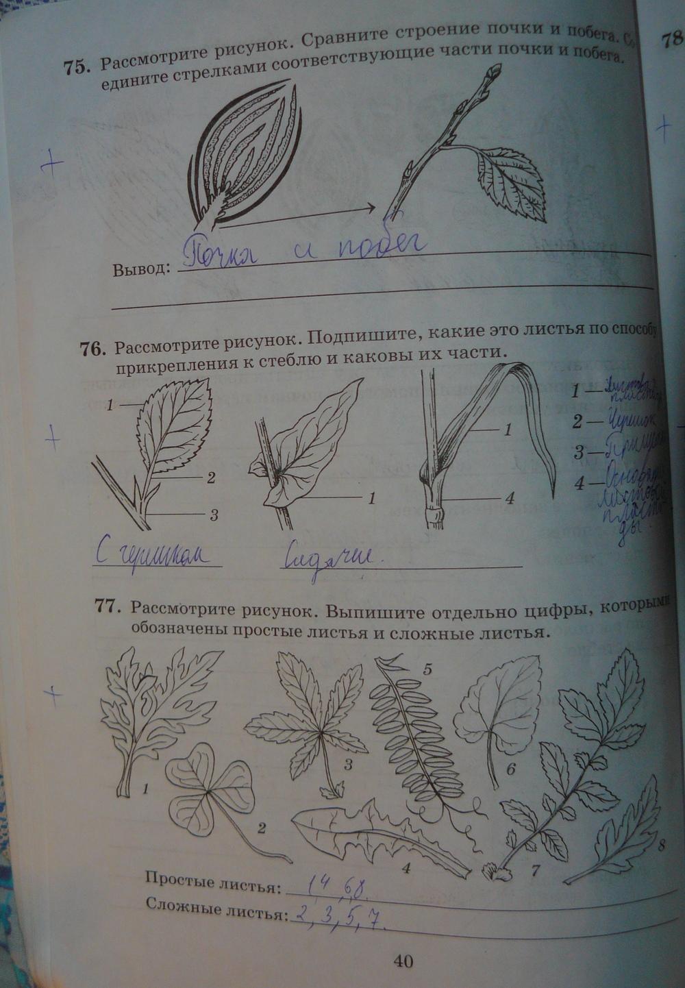 по тетради класс биологии по дрофа рабочей решебник 6 пасечник