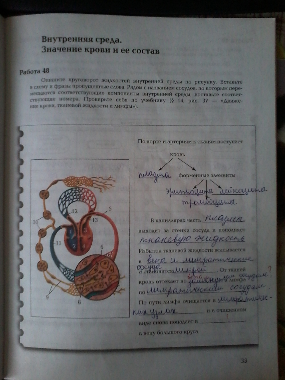 Гдз биология 8 класс драгомилов учебник